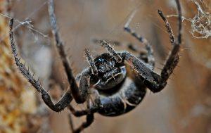 Spider venom stroke
